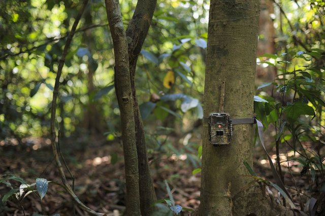 <p>The best home wildlife cameras to photograph birds and garden animals</p>