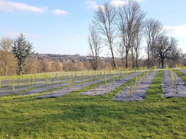 Trees have been planted in Gadebridge Park
