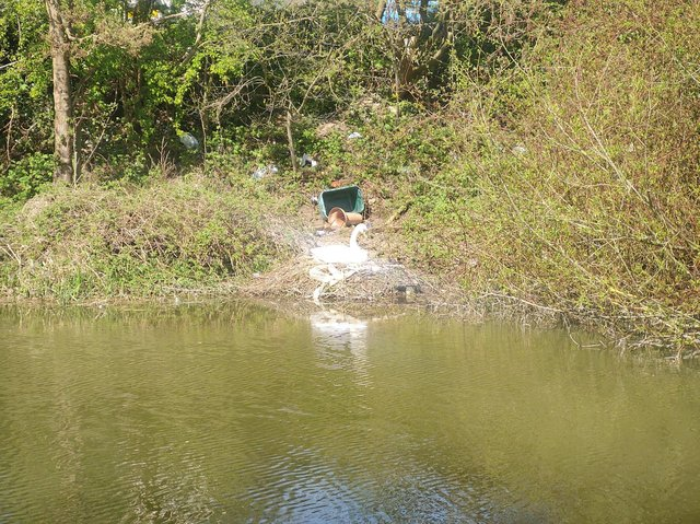 Guy saw a family of swans sitting on a nest surrounded by plastic waste near the canal
