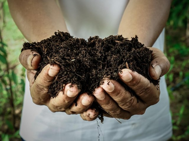 Free compost giveaway to Dacorum residents