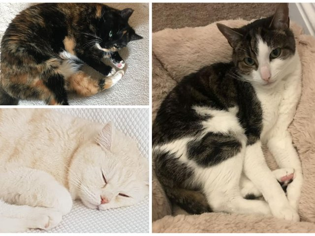 Could you offer a new home to one of these cats?