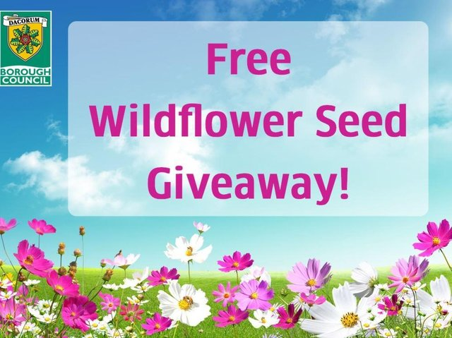 Wildflower Seed Giveaway