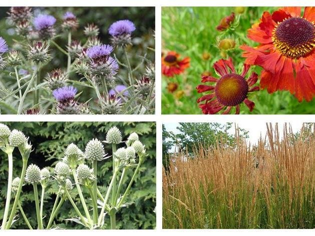 Sunnyside Rural Trust will be involved in this year's RHS Hampton Court Garden Festival